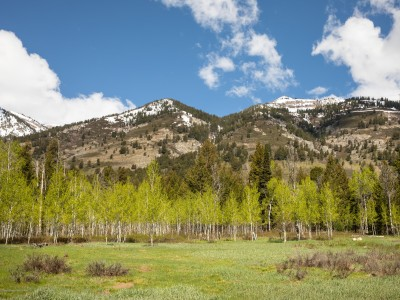 3635  COYOTE CREEK Teton Village Land
